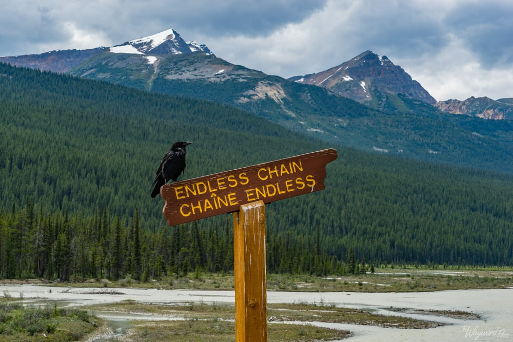 Endless Chain Mountains  Signpost- The Wayward Post - Photo Story - Jasper National Park, AB Canada
