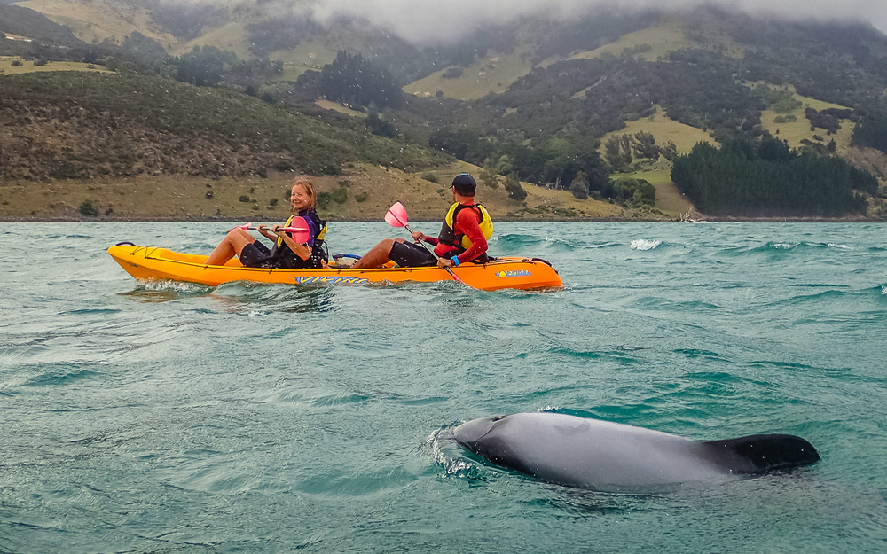 Kayaking with Hector's dolphins outside Akaroa. Photo courtesy of Mafi's Kayak Tours.