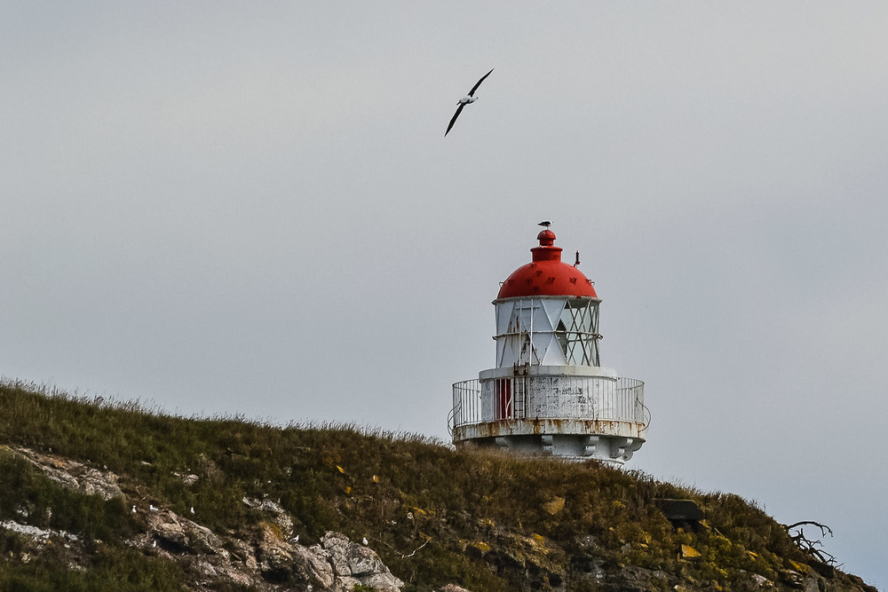 Okia Trail, Taiaroa Head lighthouse with albatross. Photo by Julia Reynolds.jpg