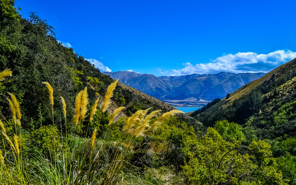 Greta Trail, Lake Ohau. Photo by Julia Reynolds.