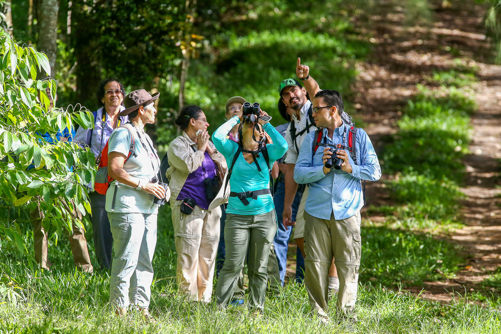 Bird watching La Robleda Cayey