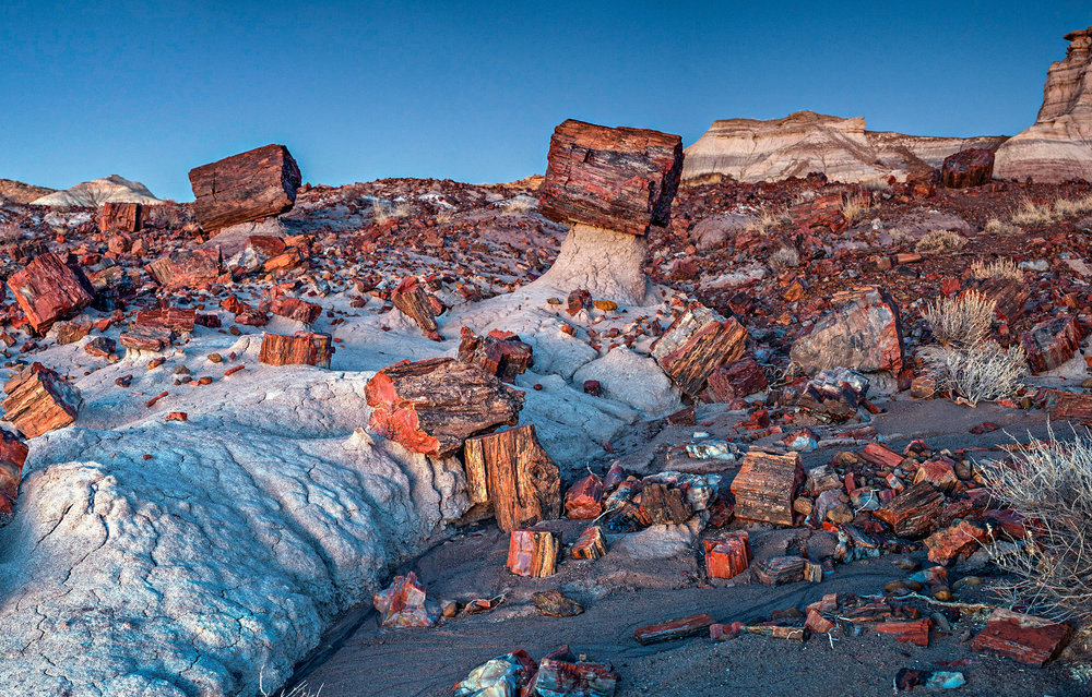 Jasper Forest, Petrified Forest National Park - avk - Credit NPS