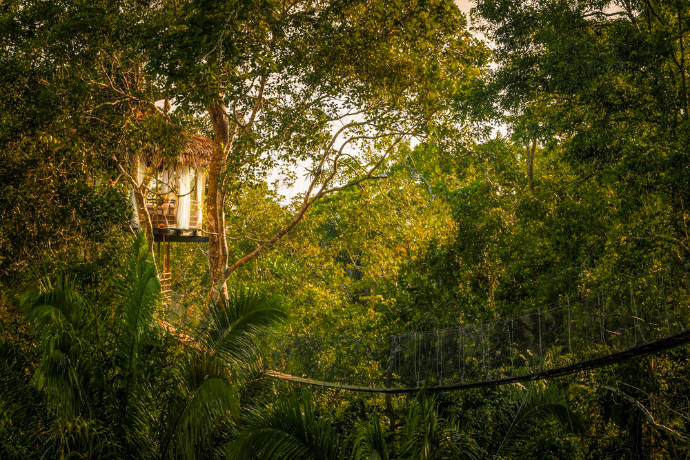 Eco-Friendly Treehouse Resorts