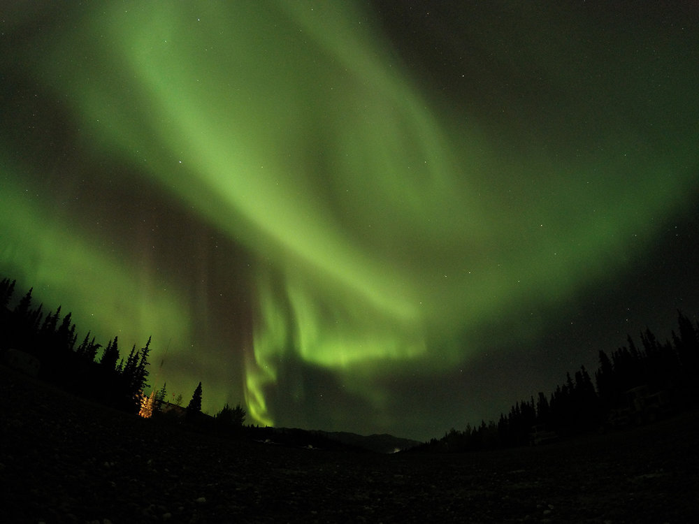 Northern Lights in Denali National Park. Photo Credit: Jamon Rice