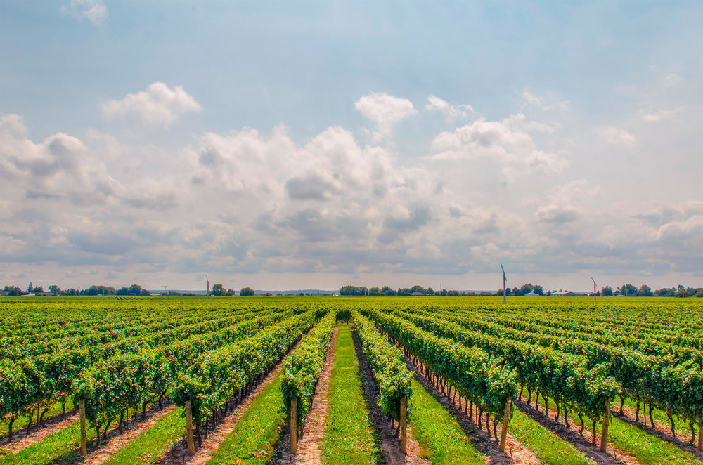 Sipping Consciously: 5 World Leaders in Sustainable Viticulture
