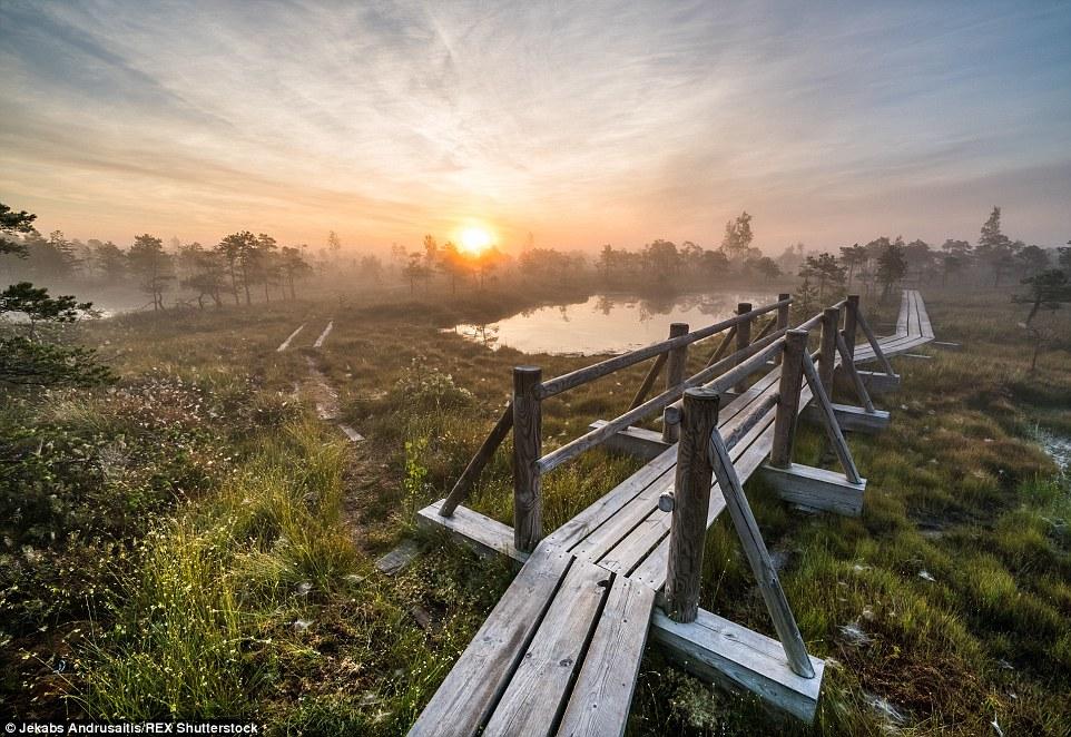 Kemeri Bog - Latvia