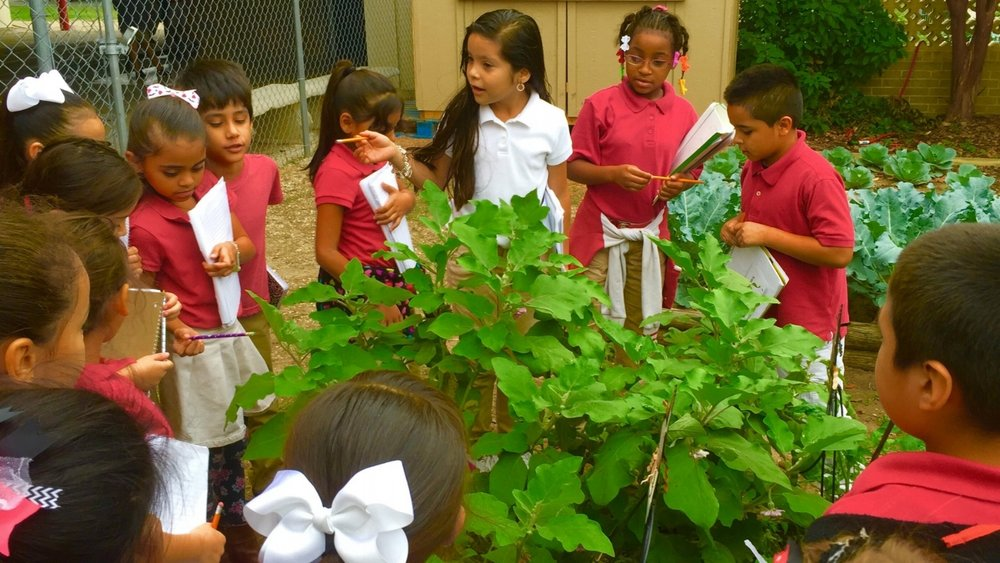 Gardopia Garden's Garden-Based Learning Program @ Bowden Elementary School in San Antonio, TX