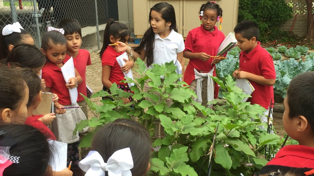 Garden-Based Learning @ Bowden Elementary School