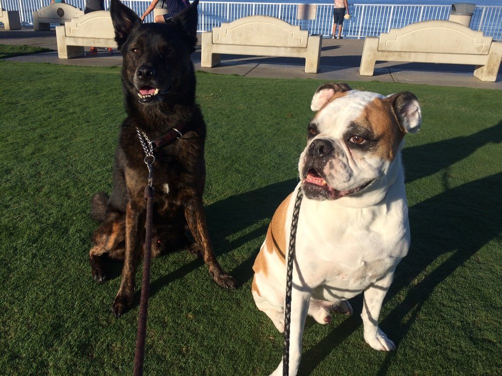 Diesel and Paco in Del-Mar,Ca