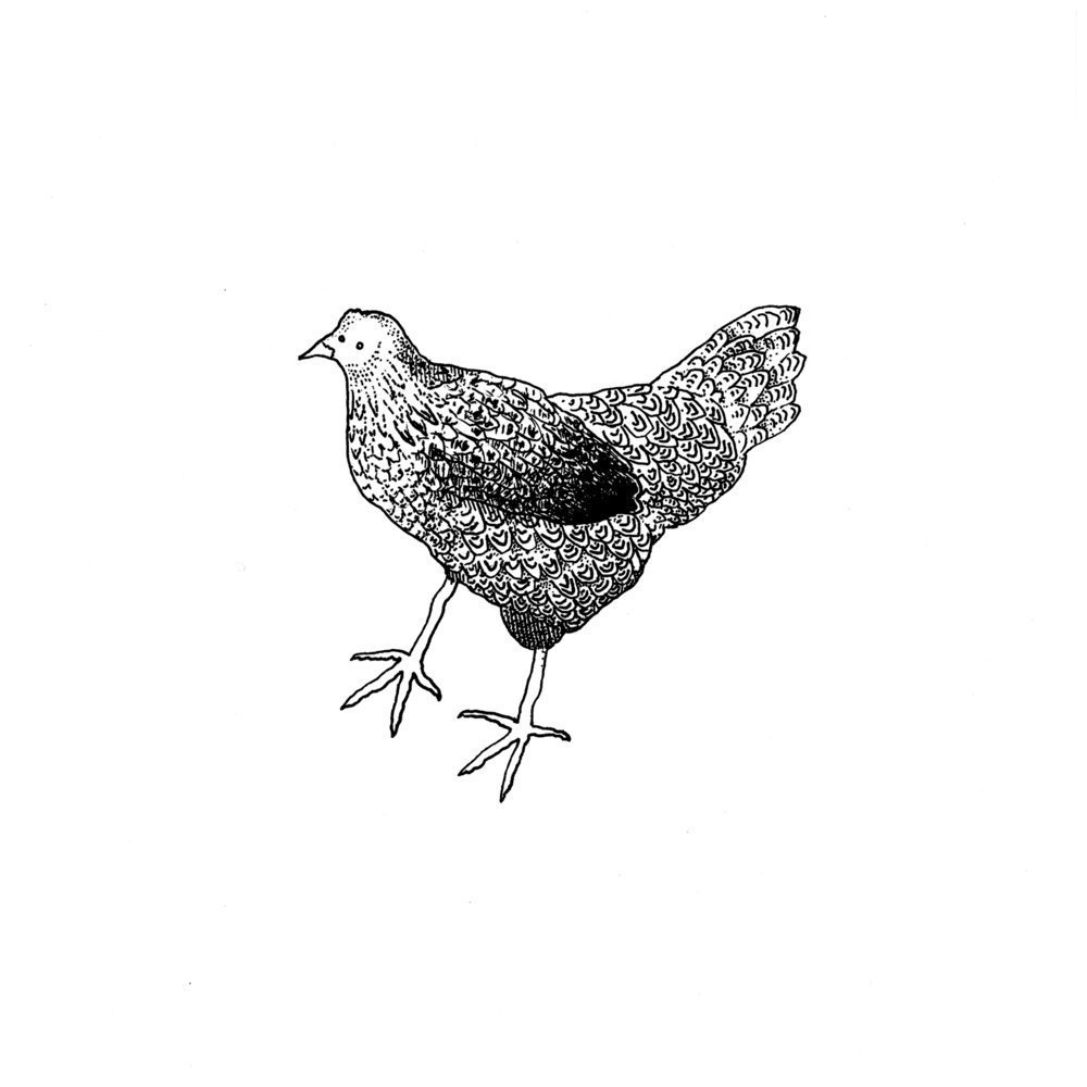 2018-02-11 003 chicken copy.jpg
