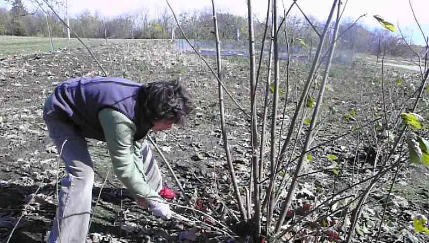 harvesting bark