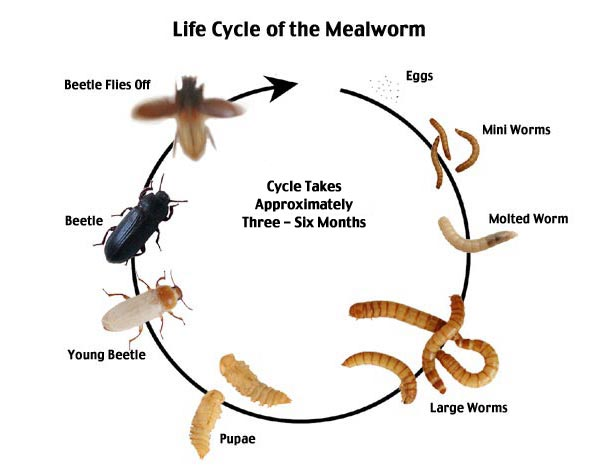 mealcycle1.jpg