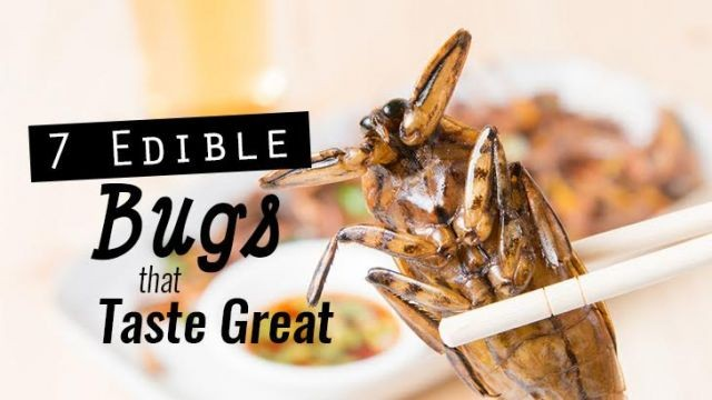 Check out which 7 edible bugs that taste great! http://bit.ly/2D9W0tF  Start farming and get our Hive™! http://bit.ly/farmNOW  are YOU #farming yet? #entomophagy #edibleinsects #entovegan #bugappetit #futurefood #superfood #vitalproteins #b12supplements #foodsecurity #sustainablefood #ketodiet #paleodiet #vegandiet #farmtotable #foodinnovation #farmers #internetoffood #organic #protein #healthyoil #nogmo #circulareconomy #urbanfarming #upcycle #wholesome #healthy #bug #edibleinsects #life