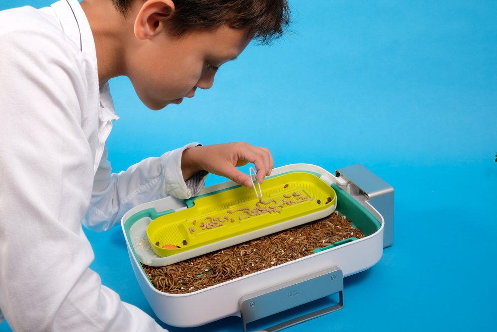 Hive®Explorer_Child picking Life Stage©LivinFarms.JPG
