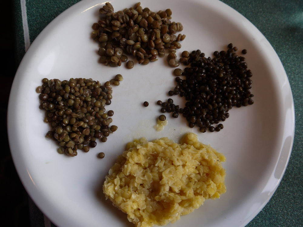 Cooked lentils: brown lentils (top), black beluga lentils (right), red lentils (bottom), French green lentils (left).