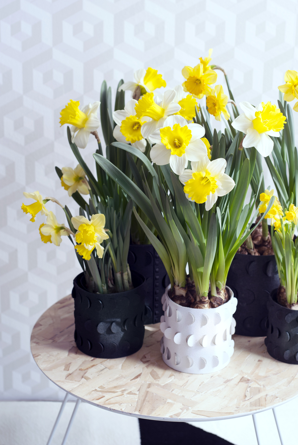 Bloomologie narcissi in pots.jpg