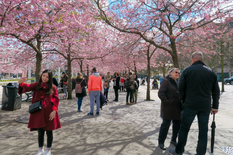 Восточнаяаллея 27 апреля 2016, уже почти цветет