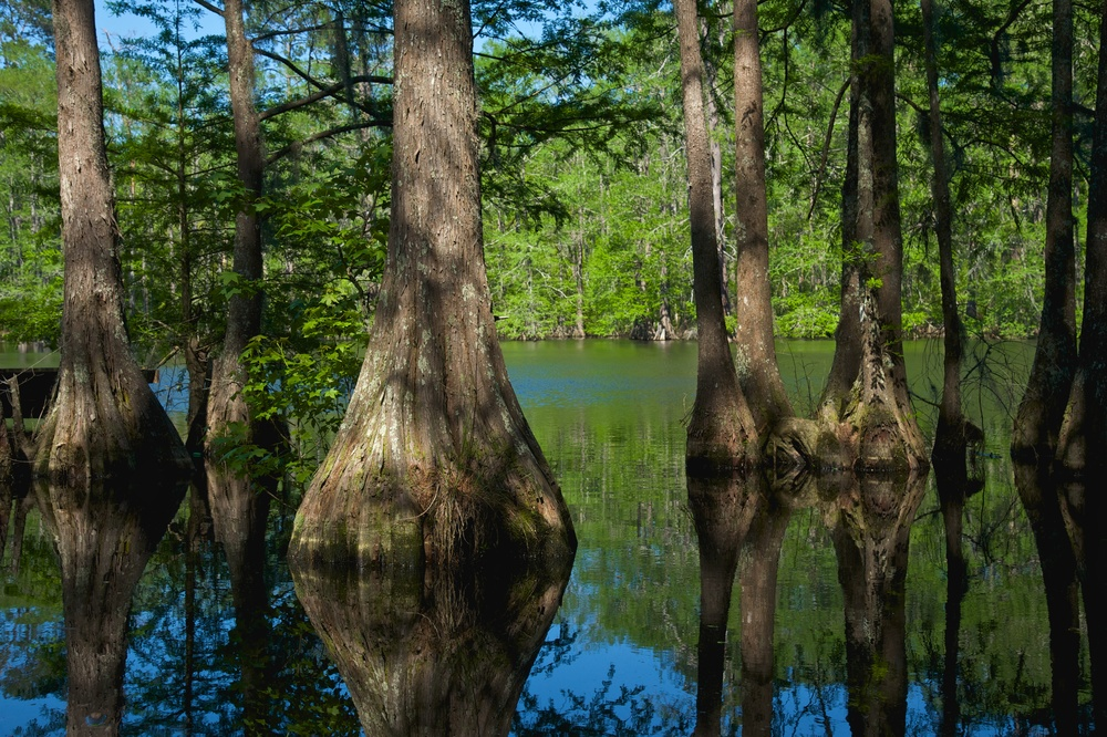 Headwaters to Baywaters Initiative    Protect acreage along riparian corridors (forest and prairie), in a holistic approach, for each of four Galveston Bay sub watersheds (Lake Creek, Cypress Creek, Spring Creek, Buffalo Bayou, Clear Creek and two major rivers- San Jacinto and Trinity) and develop plans to improve habitat for birds migrating between the coast and inland areas.