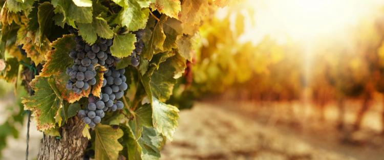 vini-biologici_1.jpg