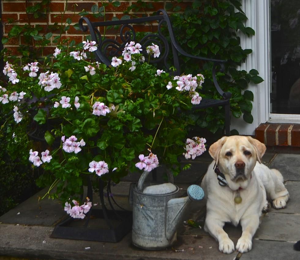 Wallflowers-e1374842219748.jpg