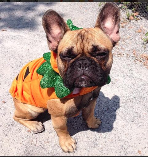 Martha Stewart Halloween Instagram  14