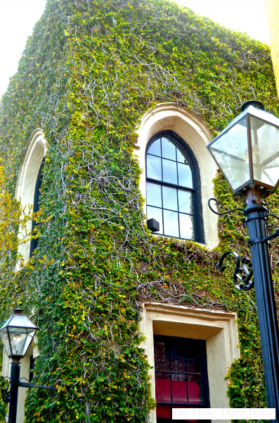 Charleston, ivy covered home