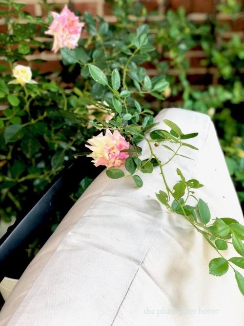 climbing rose via Chalet
