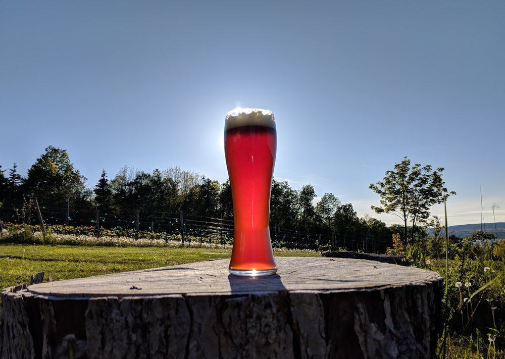 Our Dubbel Major with the sun at its back.