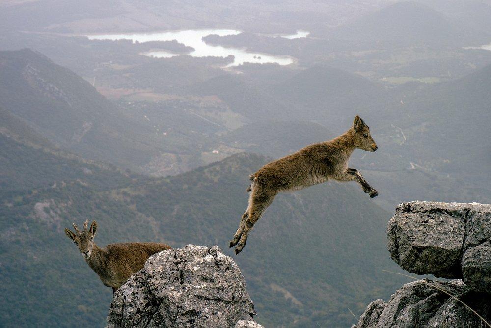 mountain-goats-1156056_1920.jpg