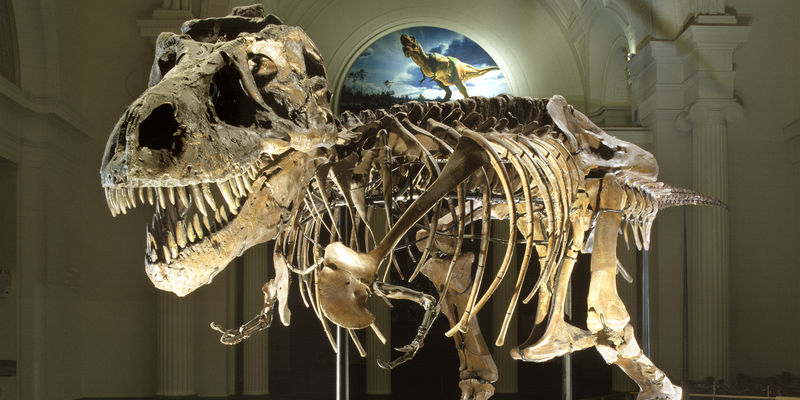 Displaying Your Dinosaur: Fossils vs  Casts — #Museumpalooza