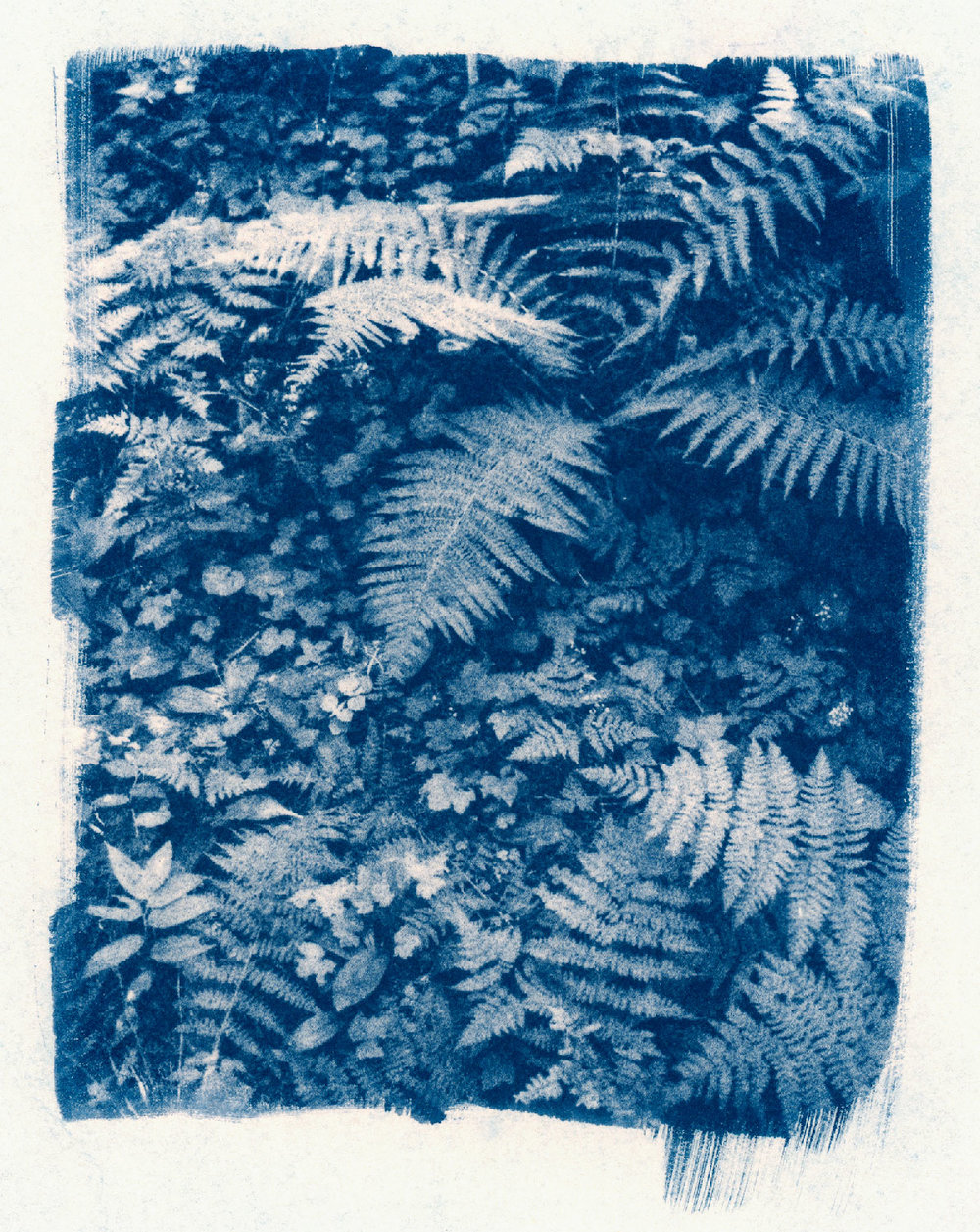 sleeping on blankets of fern