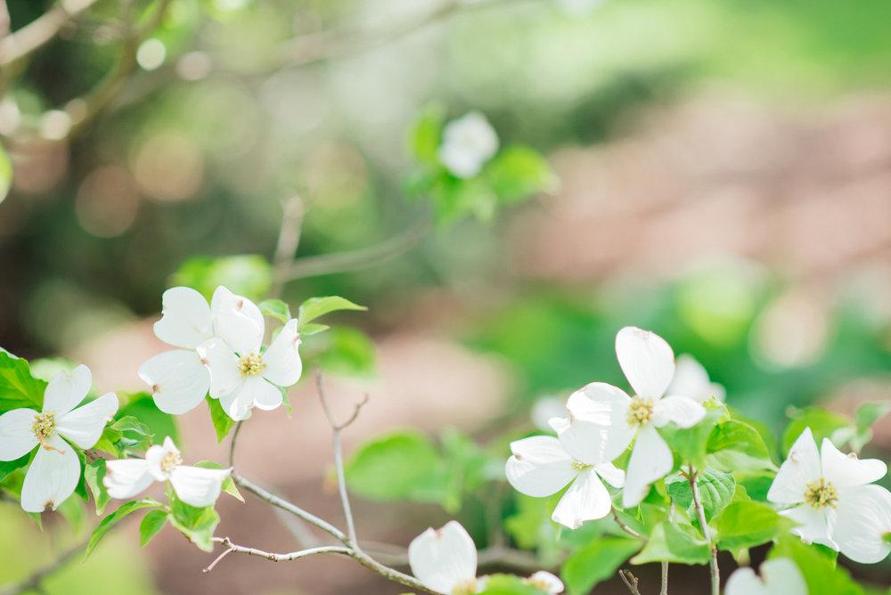 Flowers at Vander Veer Park