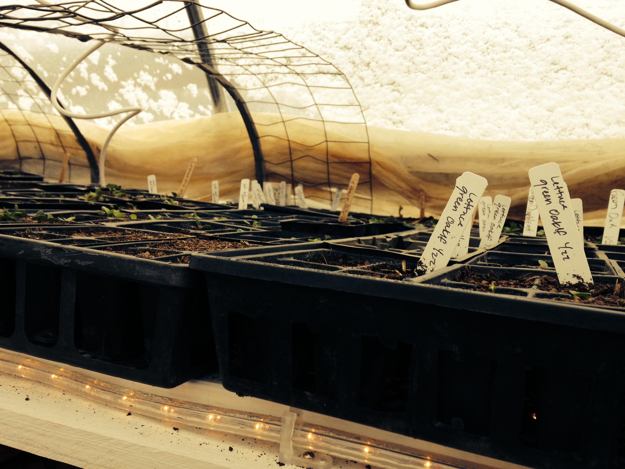 seed warming2