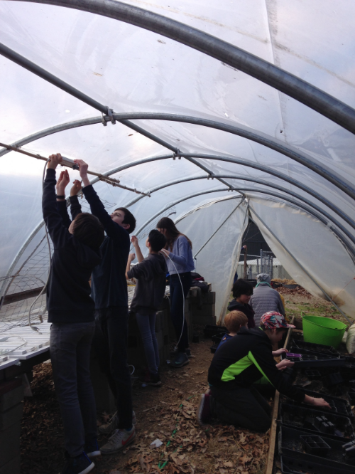 Kevin's 7th Grade Crew work to get the hoop house ready for seed starting.