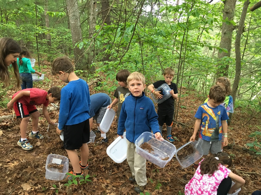 Kindergarteners learn to sift leaf litter in our shake boxes and look for terrestrial invertebrates.