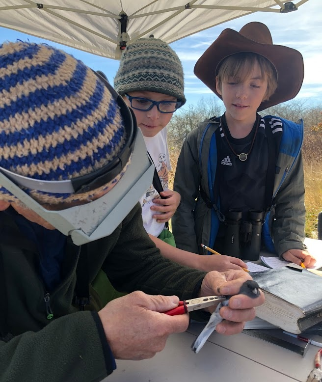 Big Bald Banding Station - We work directly with the Southern Appalachian Raptor Research team gathering migrating birds from nets, weighing them, measuring their wings, and tagging them with small metal bracelets. Students learn more about bird adaptations, why birds migrate, & what birds are in your backyard!