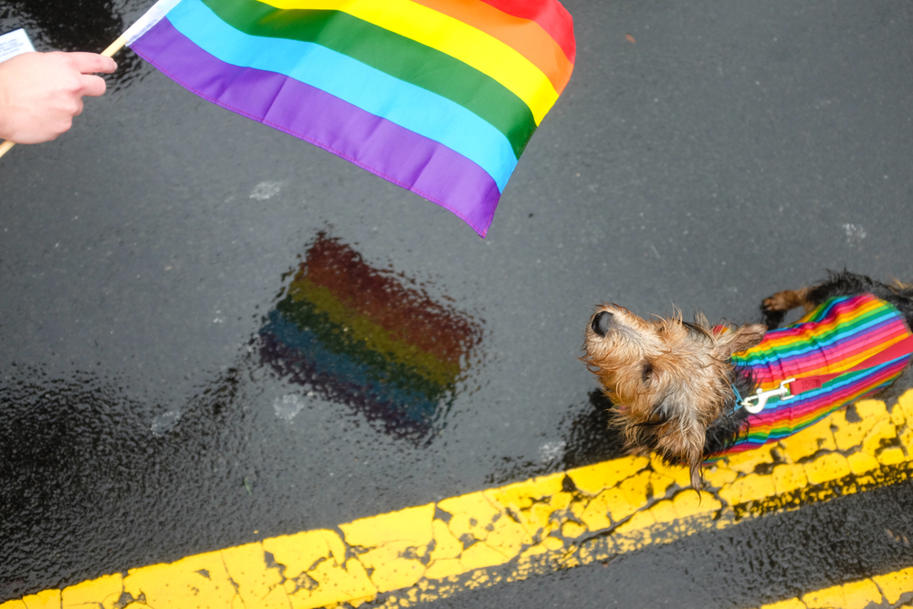 A dog at the Durham Pride Parade in Durham, North Carolina on September 26, 2015.