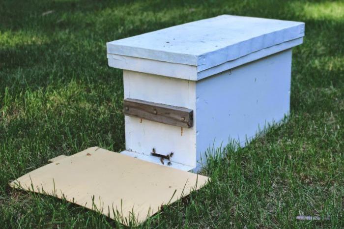 bees21.jpg