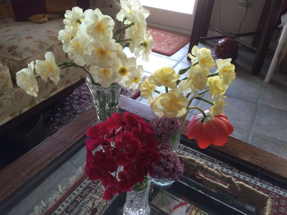 Keep daffodils separate from other flowers in vases so daffodils don't kill other flowers.