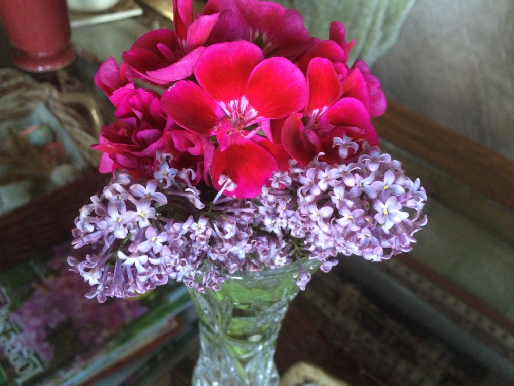A sprig of old-fashioned lilacs keep a sprig of geraniums company on my den's coffee table.