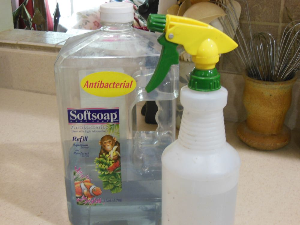 Homemade insecticide with dishwashing or antibacterial soap and water in a spray bottle.