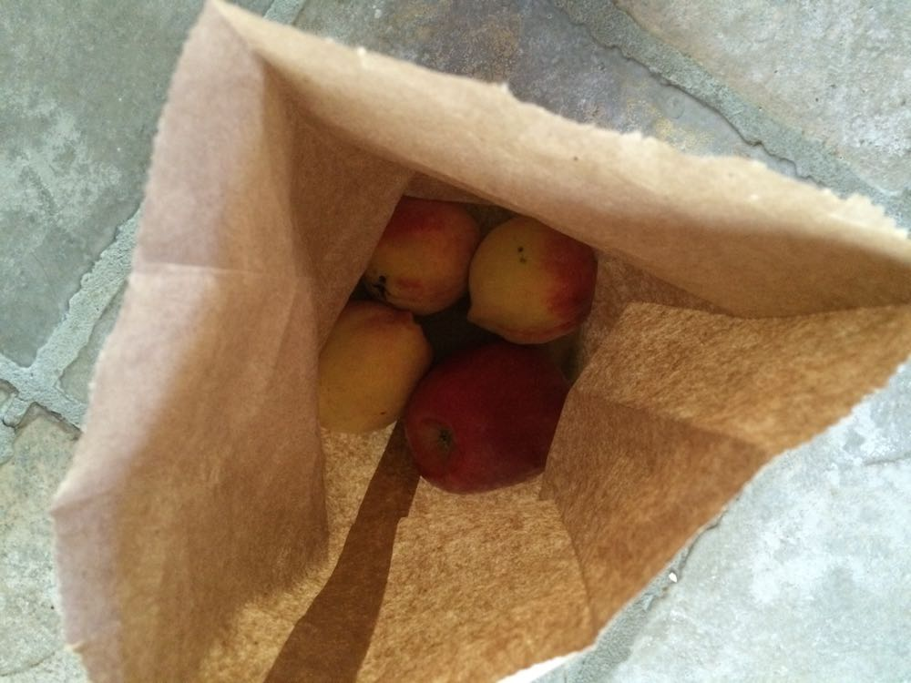 My three little peaches in a brown bag with an apple to finish ripening, squirrel-free!