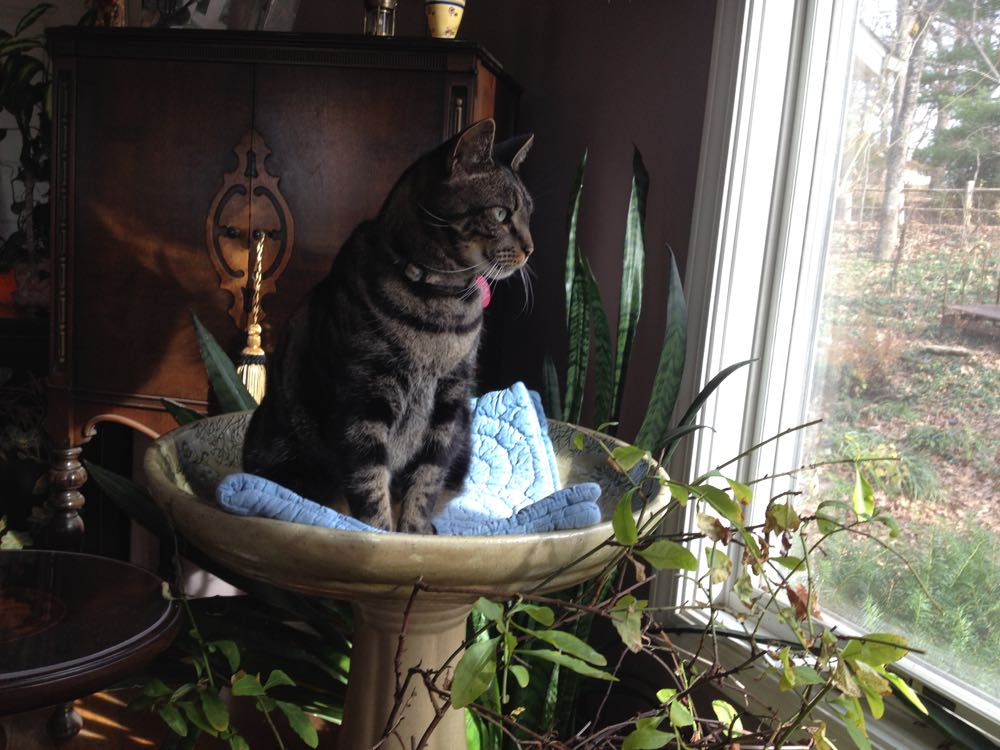 Boo Boo likes to watch birds in the bird feeder from his favorite perch, a ceramic bird bath.