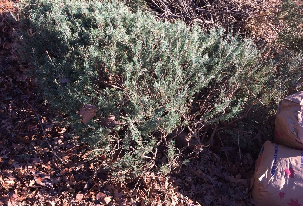 Recycle Christmas trees as wildlife cover, a fish nursery or take to a recycling center for mulch.