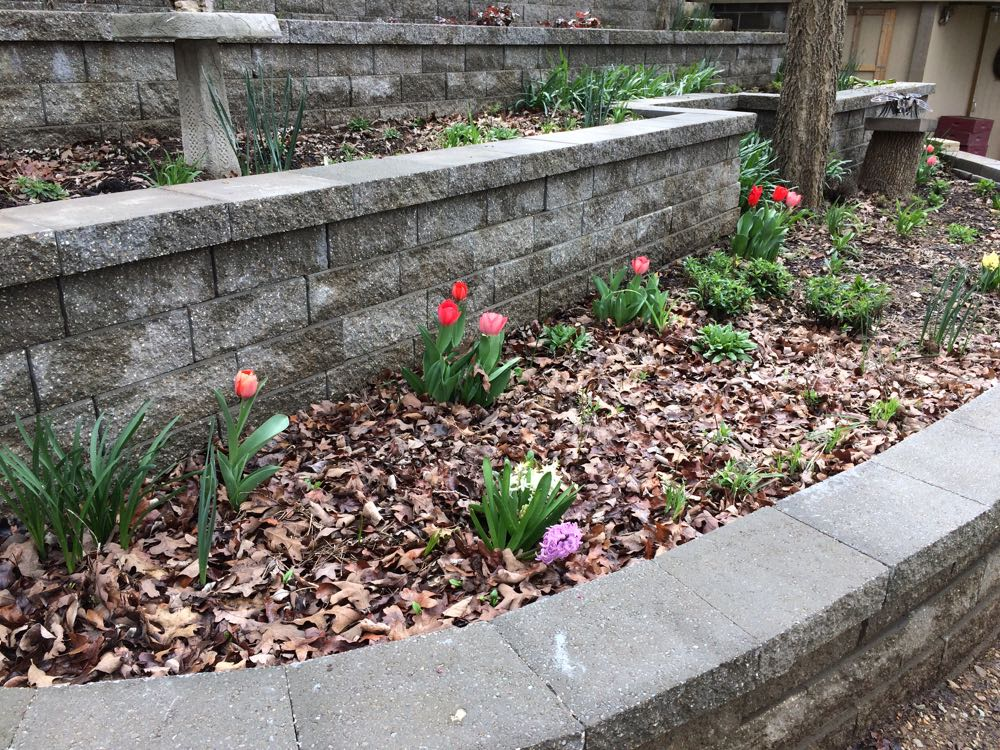 The view from the other side of the driveway retaining wall, tulips are pretty from both ends.