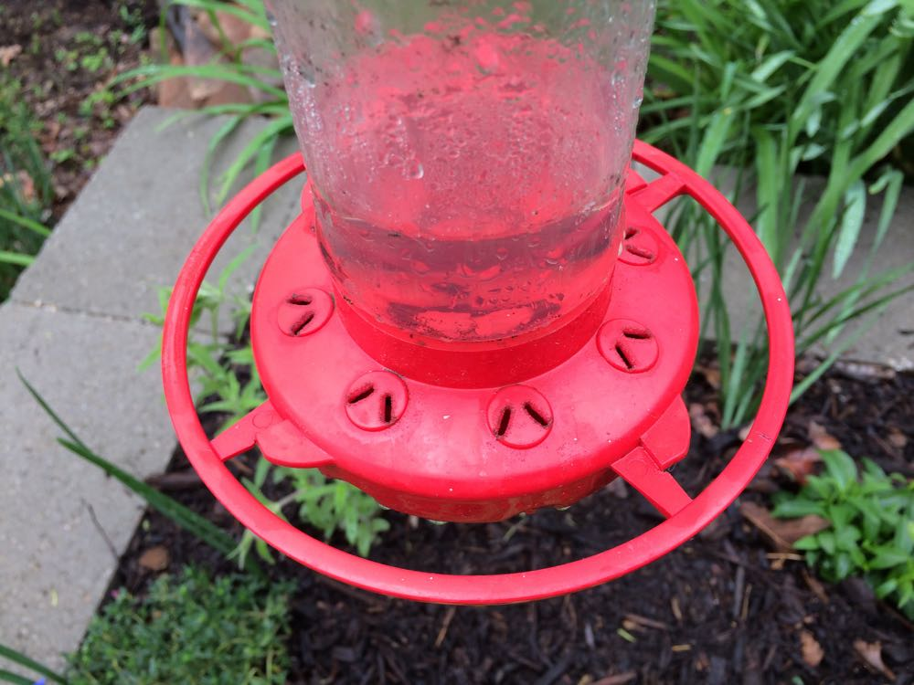 A good hummingbird feeder has feeding slots that are flush with the surface. That way the feeder can easily be cleaned with an old toothbrush and hot water. Do not use detergent when cleaning a hummingbird feeder, a little bleach in water will remove any mold growing inside the container. (Photos by Charlotte Ekker Wiggins)