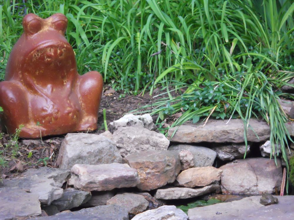 This large ceramic frog met her match with one of the Missouri's native green frogs.