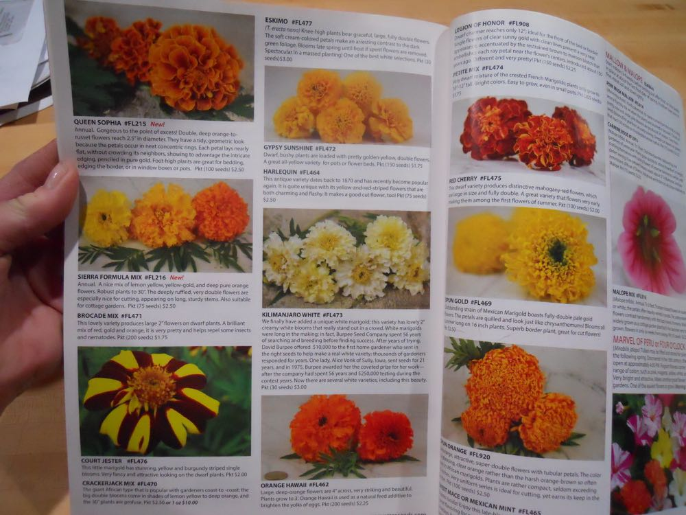 Marigolds Baker Creek had in their 2017 catalog. My 2018 catalog is around here somewhere....