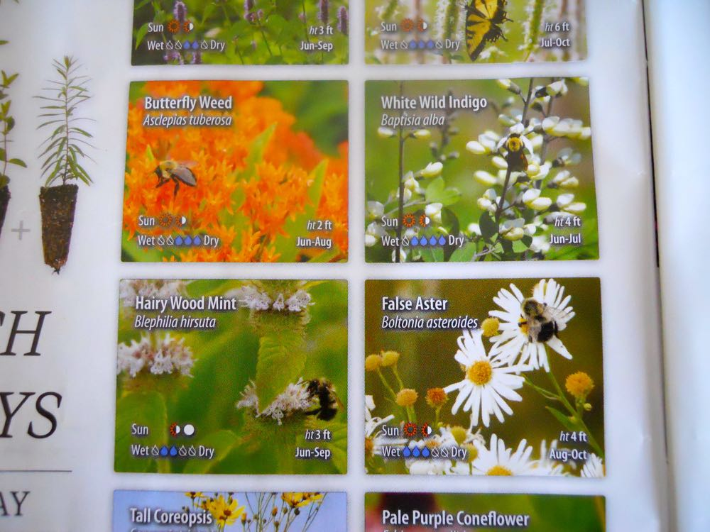 Love, LOVE these plants photos with visiting pollinators, this is the way flower photos should be!