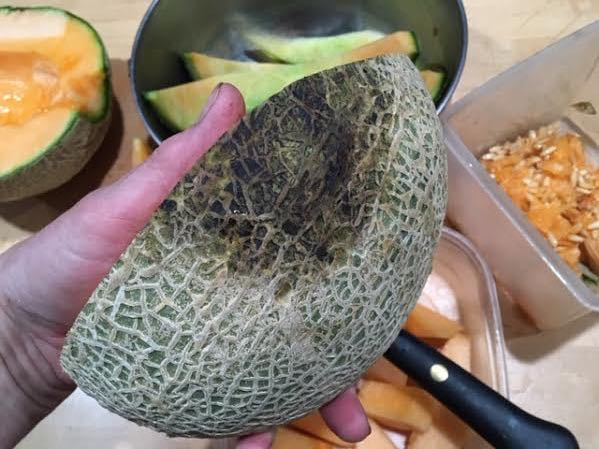 Cardboard tucked under the cantaloupe kept it from rotting as it was sitting on the vine.